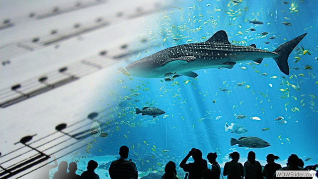 Aquarium Fugue